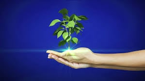 giving-plant