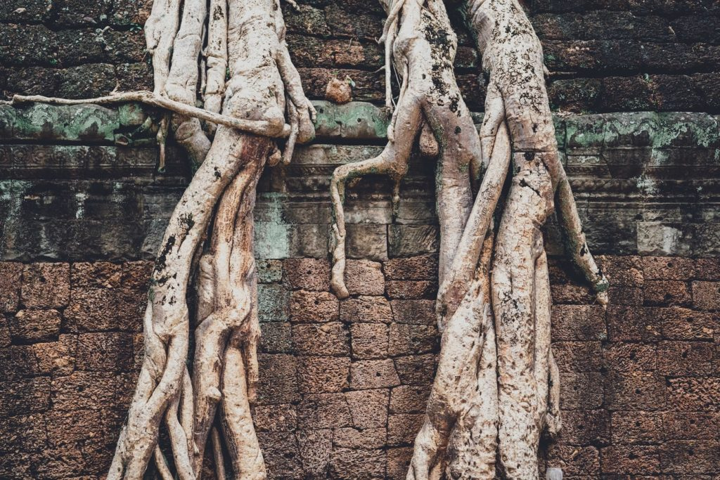 roots on a wall